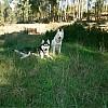 Nakoma y Kody