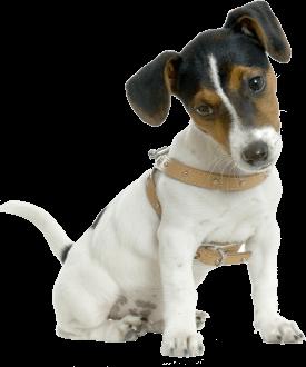 adiecan-adiestramiento-canino-1