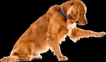 adiecan-adiestramiento-canino-avanzado