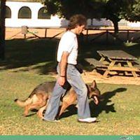 adiecan-adiestramiento-canino-junto
