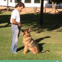adiecan-adiestramiento-canino-llamada