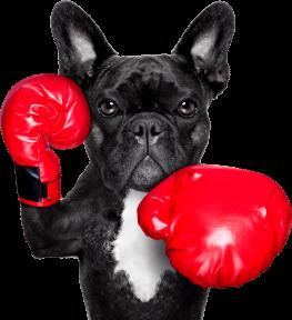 adiecan-adiestramiento-canino-modificar-conductas