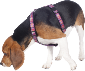 adiecan-adiestramiento-canino-olfato