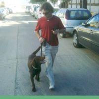 adiecan-adiestramiento-canino-paseo-tranquilo
