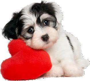 adiecan-adiestramiento-canino-pre-adiestramiento-cachorros