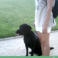 adiecan-adiestramiento-canino-tjunto