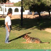adiecan-adiestramiento-canino-tumba