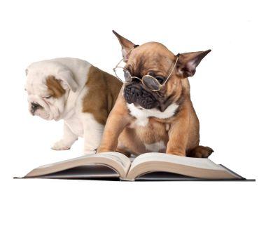 adiestramiento-canino-adiecan