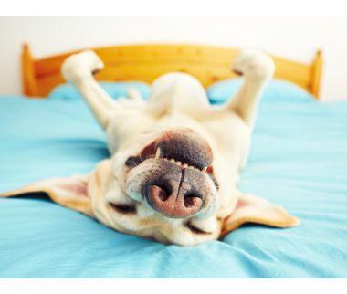 incio_residencia_canina_adiecan