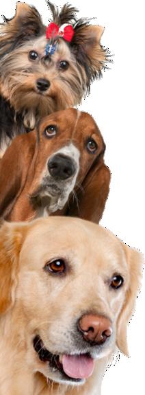 perros-vertical